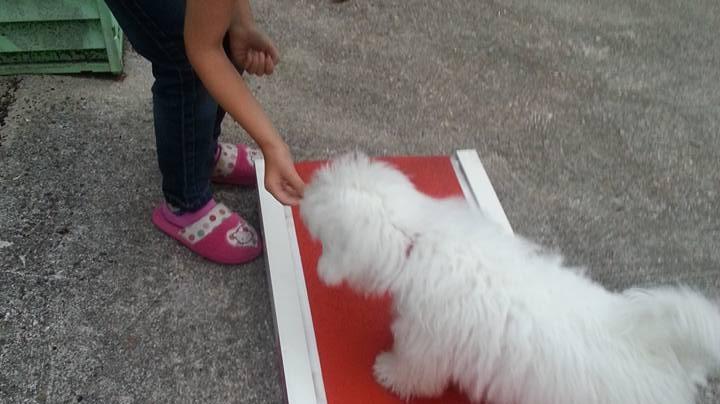 comprendre le chien